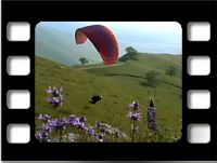 frame from Spring Conditions movie